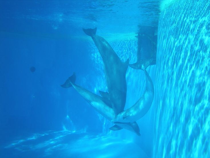 Have you ever considered doing yoga with dolphins? Neither did we until we traveled to Las Vegas recently! It was such an exotic experience! Here's a great interview with yoga instructor Willow Withy... travel will never be the same after this experience for sure!