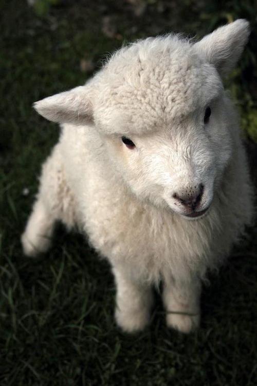 Fuzzy wuzzy was a lamb.