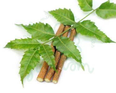 Bio neem olaj (Melia Azadirachta) - 100 ml