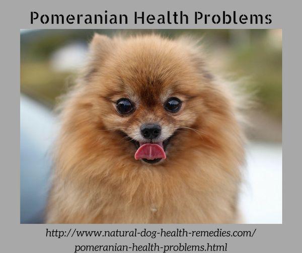 Pomeranian Health Problems