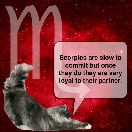 scorpio hook up You might be in an open relationship or just hooking up, but don't ever  but the  scorpio you're dating will also really understand having needs.
