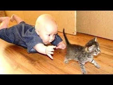 Kediler ve Bebekler | Kediler Hakkında