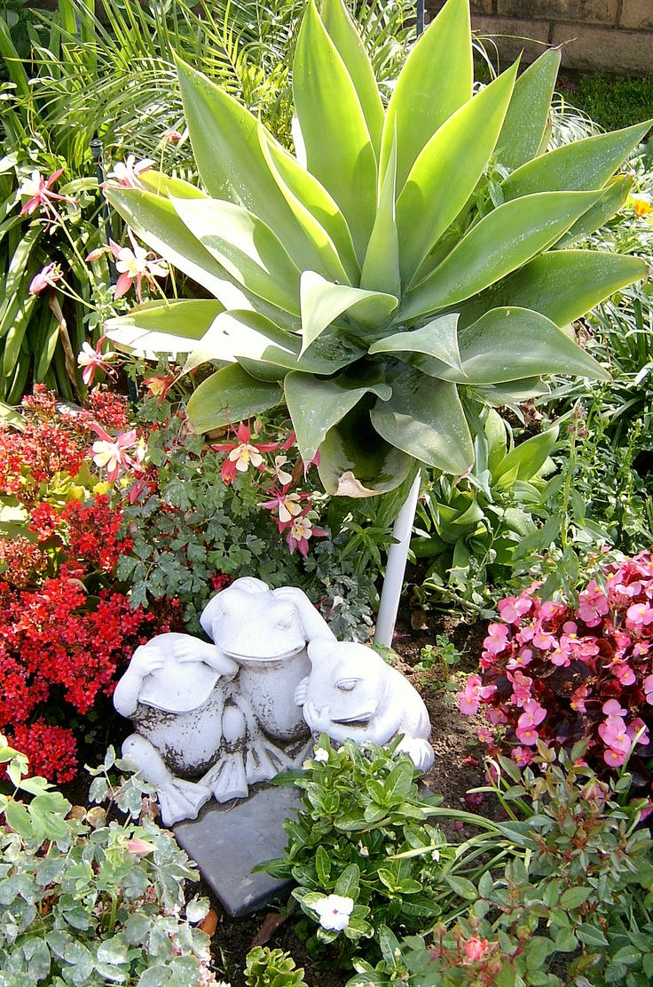 31 Best My Plants Pensacola Fl Images On Pinterest Potager Garden Vegetable Garden And Orchards