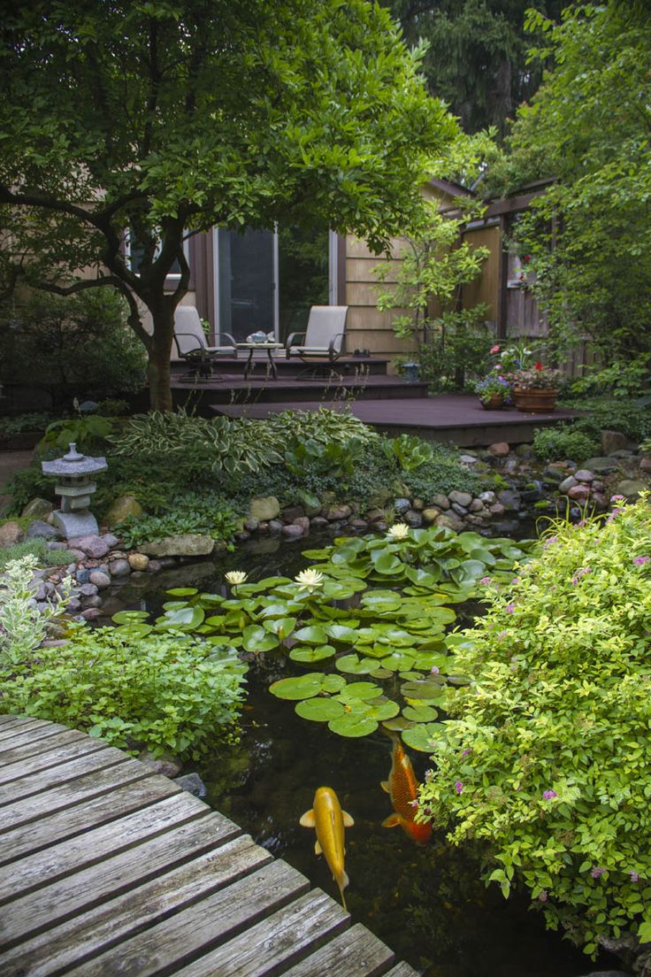 Aquatic Plants and Fish in a Backyard Ecosystem Pond. Note how the pond comes up by the deck for enhanced viewing.