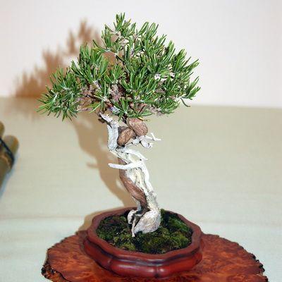 cách sử dụng cây hương thảo4