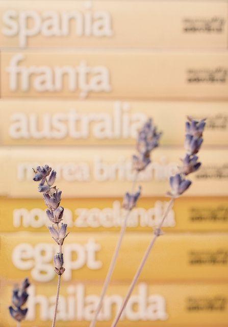 Lavender & travel guides