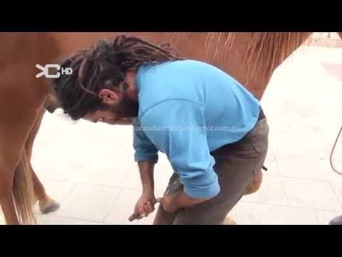 Curso herraje tradicional de caballos 1.8 - YouTube