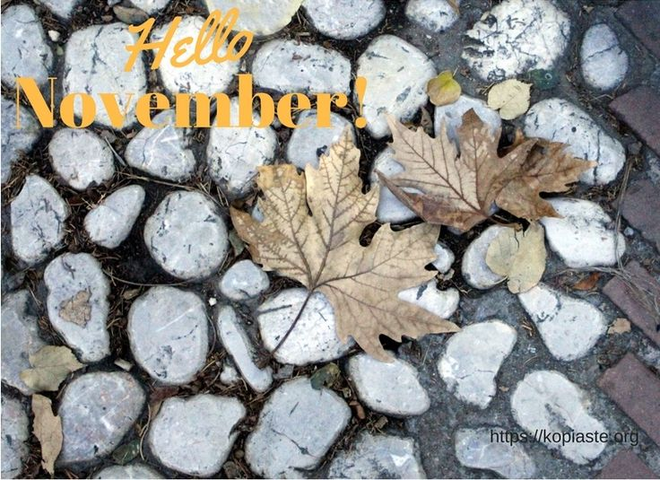 """""""Wind warns November's done with. The blown leaves make bat-shapes, Web-winged and furious.""""  ― Sylvia Plath, The Collected Poems  Autumn leaves #november #happynewmonth"""