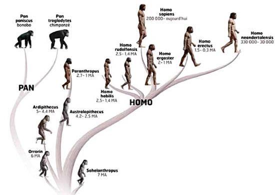 famille des hominidés                                                                                                                                                                                 Plus