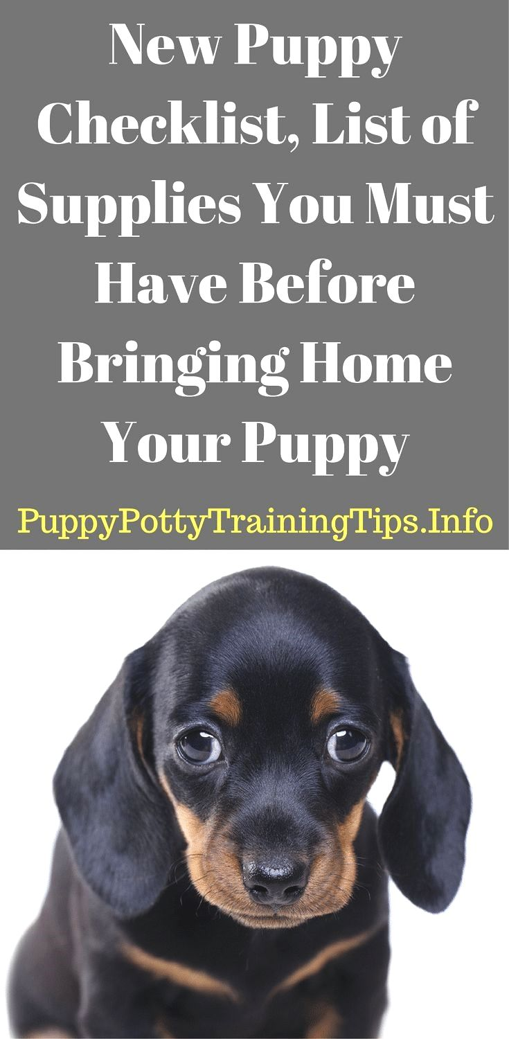 Puppy Toilet Training Guide You Need To Understand How You Can