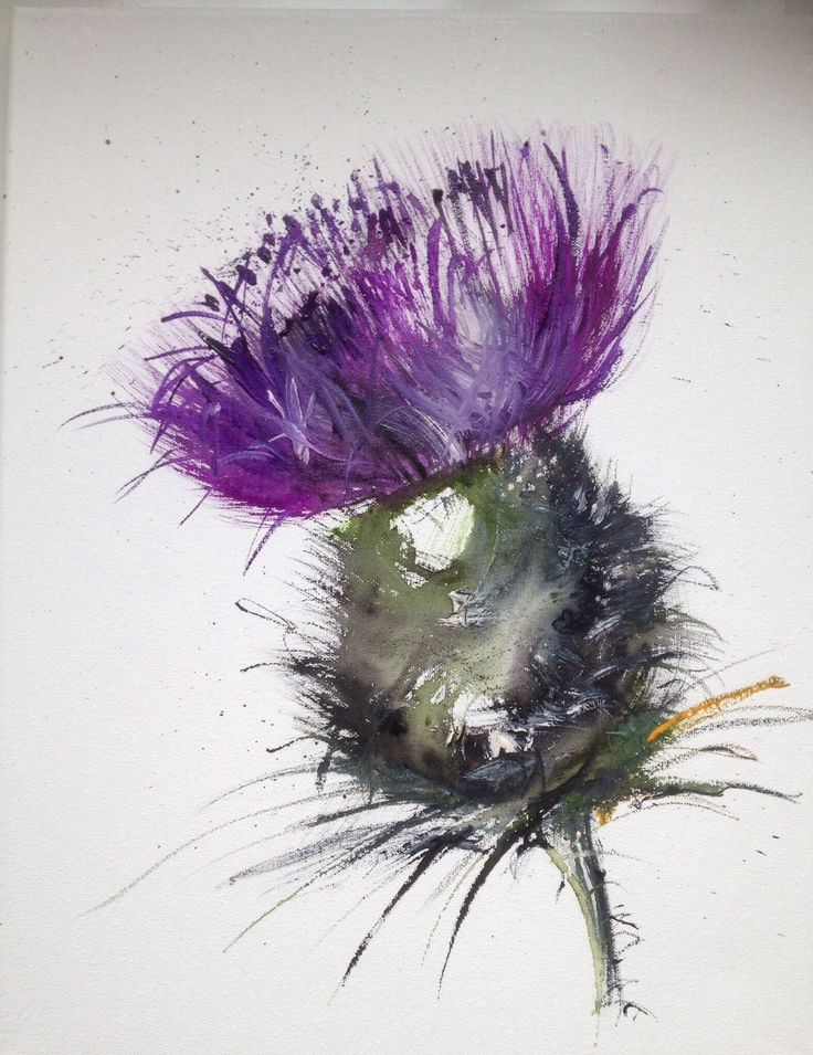 National Flower-Scotland thistle watercolor - Like it but ok if you cant work it into this piece