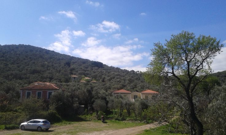 General view of the Gera's Olive Grove estate & accommodation guesthouses