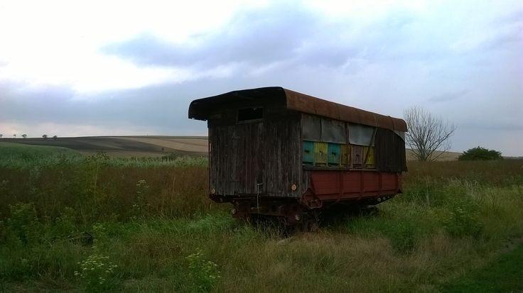 Bees Train in the fields of Czech republic