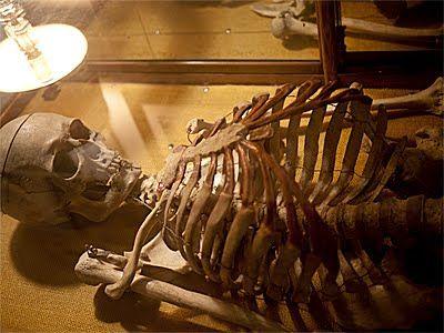 130 best human bones images on pinterest   bones, skull reference, Skeleton