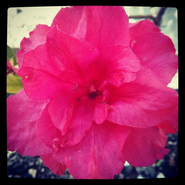 #felizdiadelamadre nunca serán suficientes flores para agradecerte por darme la vida #nexus4 | Flickr
