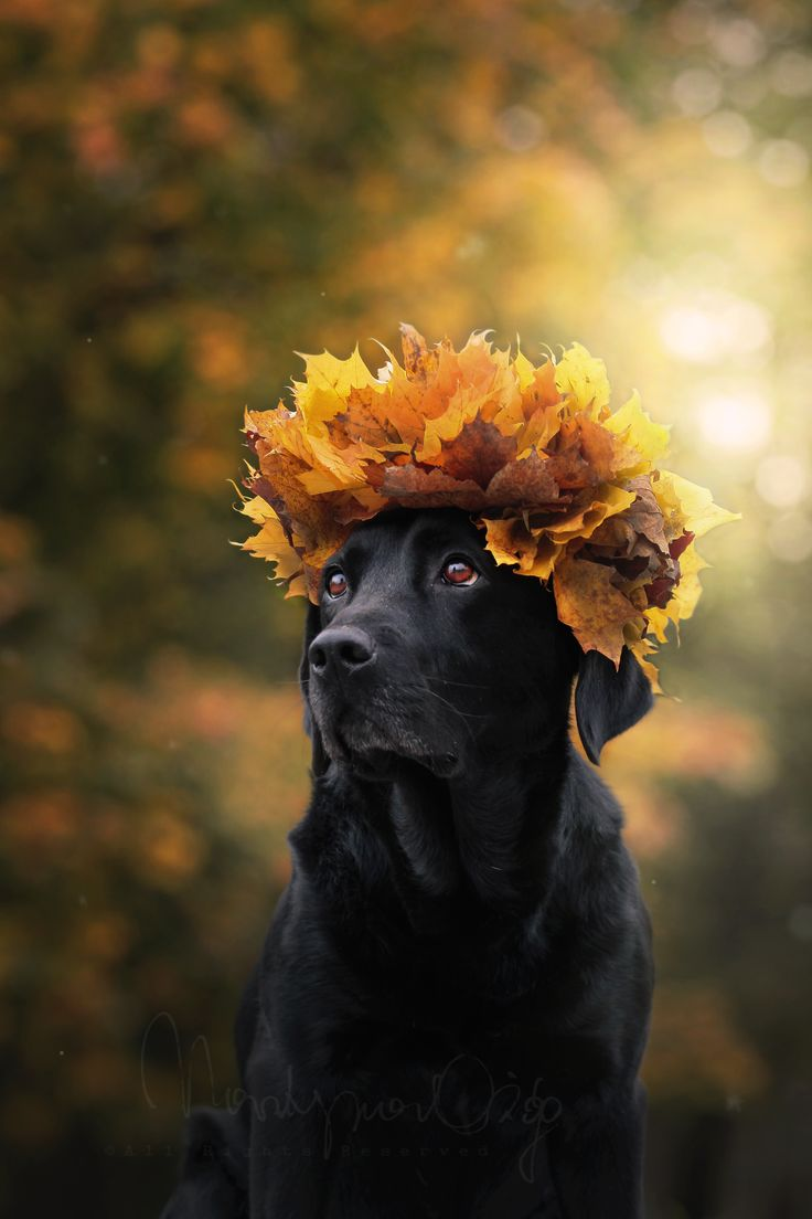 this pretty lady is also ready for Fall :)                                                                                                                                                                                 More