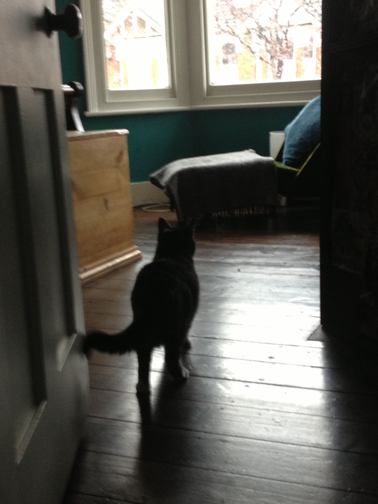 [Scene 2, cont; Django roaming the house] 'Jessie. Jess. Jess where are you? It's not funny. Where are you? Silly girl...'