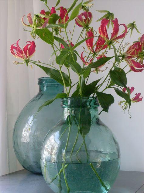 Gloriosa is een ruimte gevende bloem.