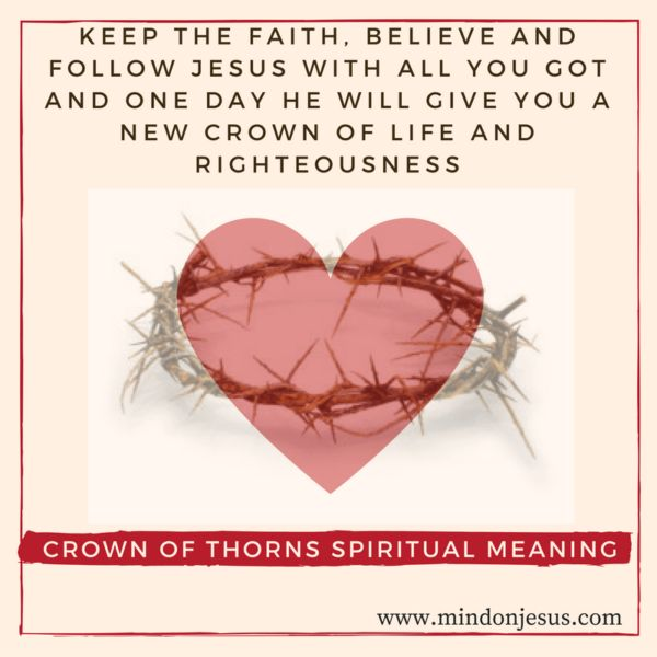 Crown of Thorns spiritual meaning