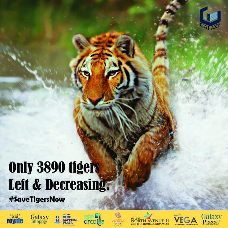 Save Tiger. Save Mankind. #SaveTigersNow July 29th, 2016 | International Day Of Tiger #galaxygroup #savetiger #wildlife #internationaltigerday