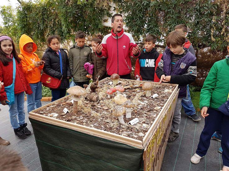 Los alumnos de tercero de primaria realizaron una excursión a la granja apícola.