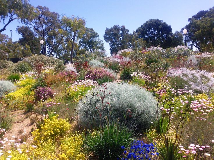 Australian native garden More