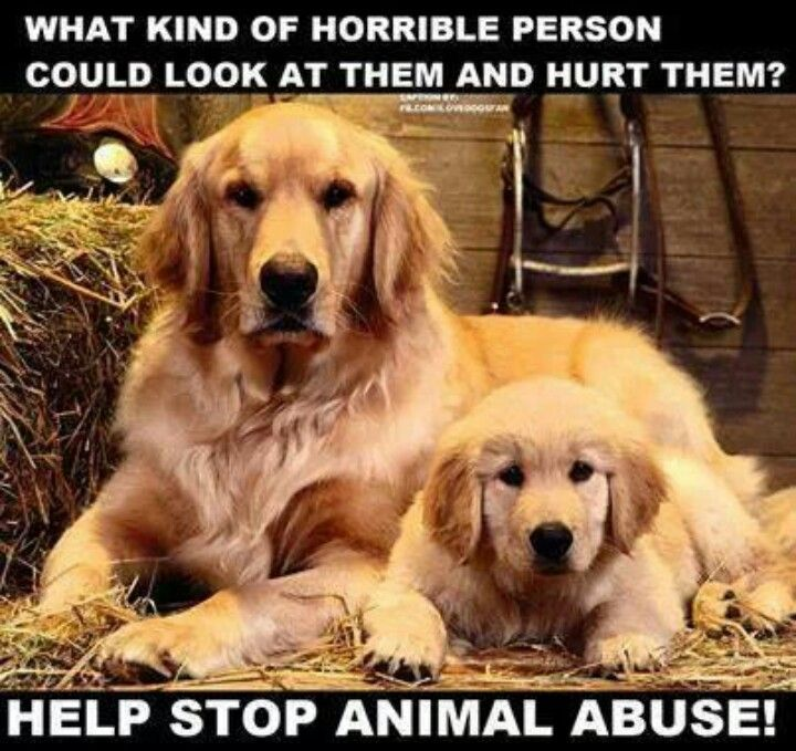 the duty of humans to stop animal abuse Because animals cannot speak for themselves, it's up to you to speak for them and report animal abuse that you witness or what you can do to stop animal cruelty.