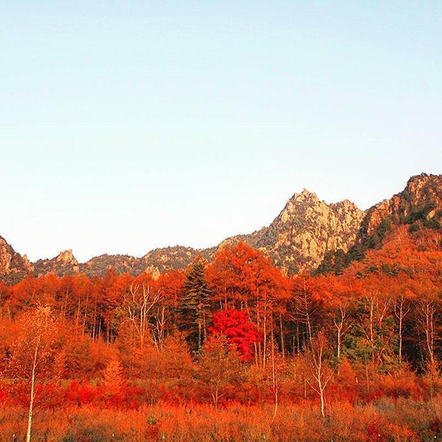 【yuripepe1218】さんのInstagramをピンしています。 《黄金色の森の中をプチトレラン状態で駆け抜けぜぇぜぇいいながらやーっと駐車場まで戻ってきた🏃🅿 駐車場に戻ってきて顔をあげるとまたこの絶景👏 夕陽で真っ赤に染まる瑞牆山と森🍁🗻✨ なんなんもうーーーーーーー!!😂😂😂😂😂😂 最後まで楽しませてくれるね~!瑞牆山✨✨😆 2016.11.7 #瑞牆山#日本百名山#日帰り登山#山登り#登山#山が好き#ハイキング#平日登山 #紅葉#秋晴れ#自然#アウトドア#秋の景色#絶景#山#好山病#森#黄金色#秋#夕陽#アーベントロート #mountains#climbing#nature#autumn #abendrot#sunset #trekking#outdoor#mountainview》