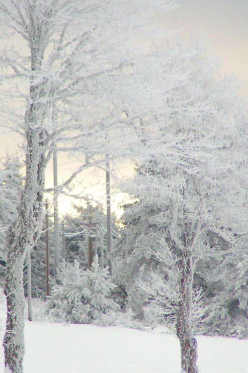 winter dreamland: Winter Snow, Winter Scene, Winter Trees, Beautiful, Winter Wonderland, White Christmas, Wintersnow, Snow White