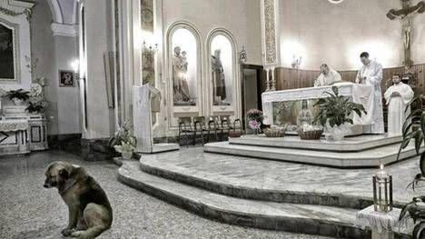 Ciccio, el perro que va todos los días a la Iglesia a esperar a su dueña fallecida