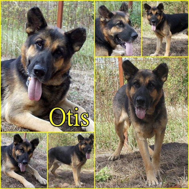 Örökbefogadható kutya, Hajdúszoboszló - Otis