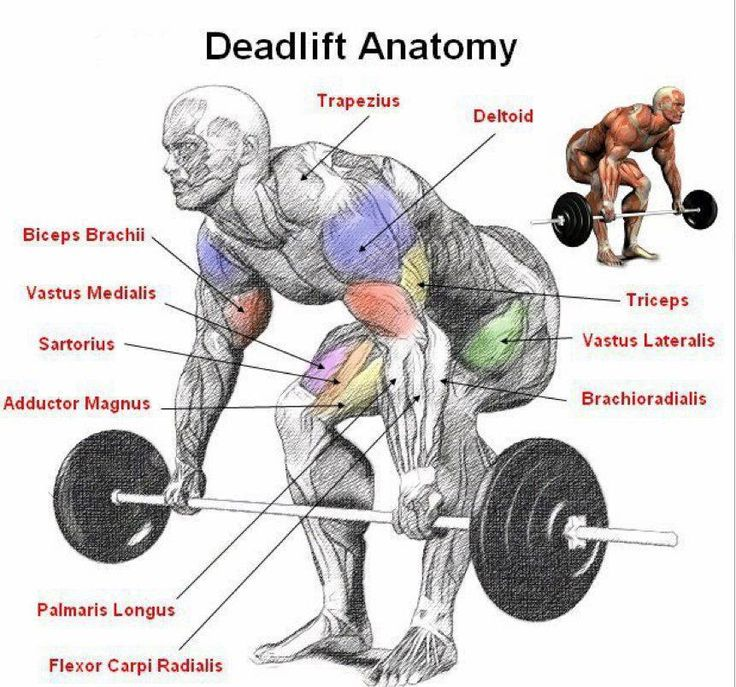 #Deadlifts - the keystone exercise. Nothing more humanly fundamental than picking something heavy off the floor. Hits the majority of major muscle groups. Huge ROI