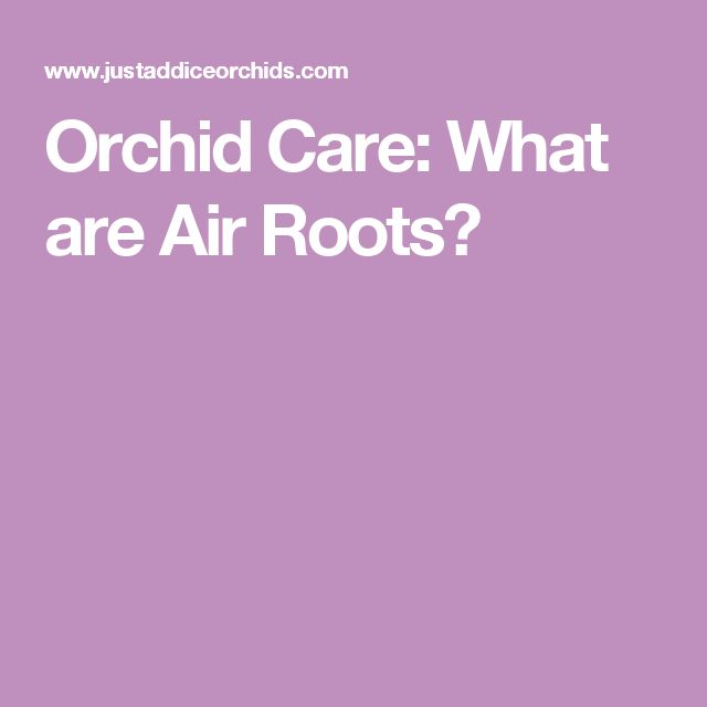 Orchid Care: What are Air Roots?
