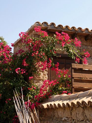 Houses of the Old Town - Famagusta, Cyprus