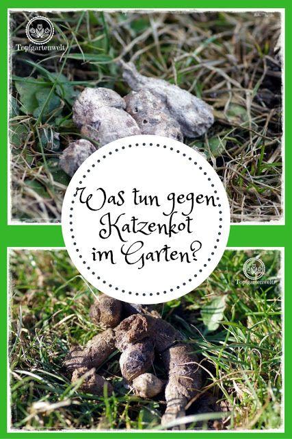 Was tun gegen Katzenkot im Garten? Gartenblog Topfgartenwelt: #Katzenkot #Maßnahmen #Garten #Abhilfe #wastun