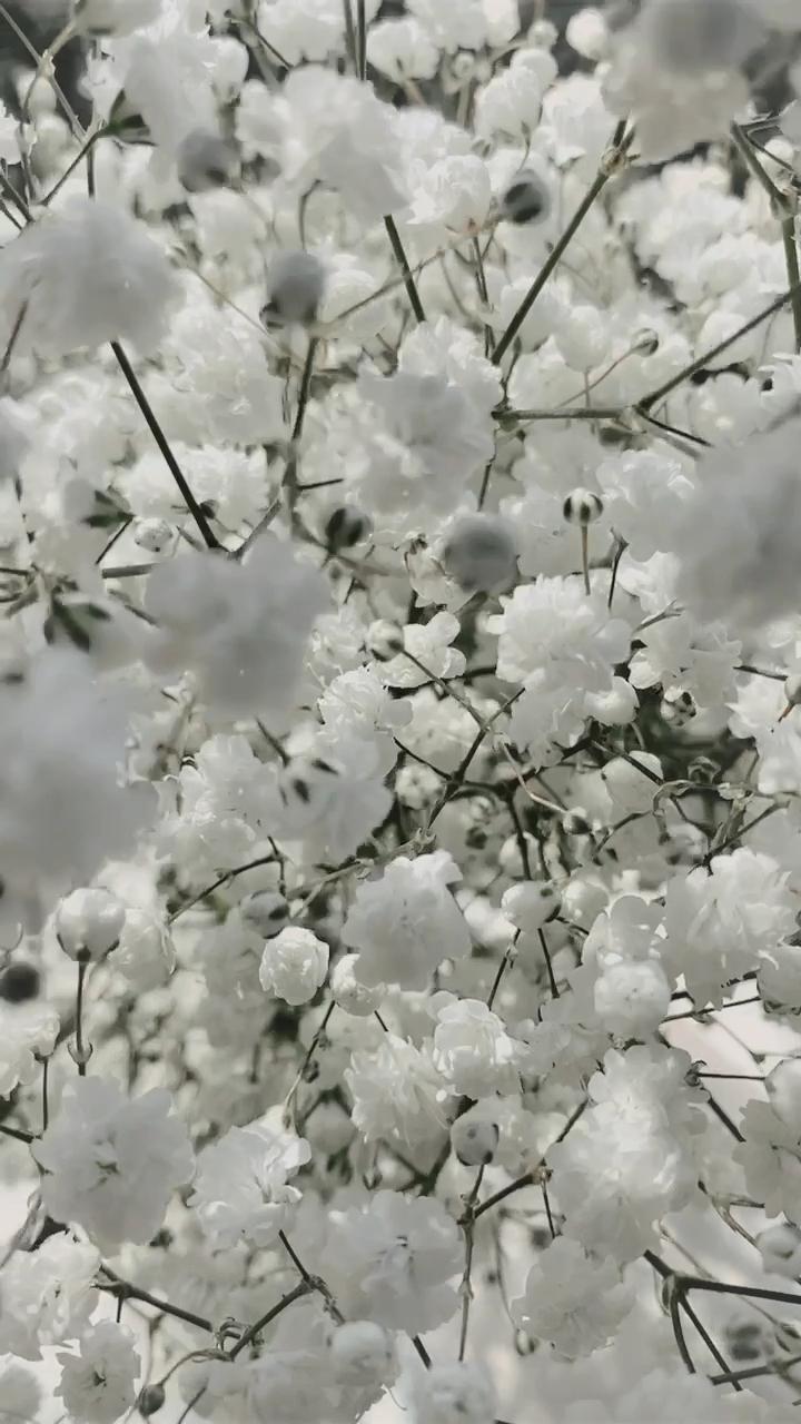 Babys Breath Flowers From Trader Joes In 2020 Flower Planters Flower Arrangements White Flowers