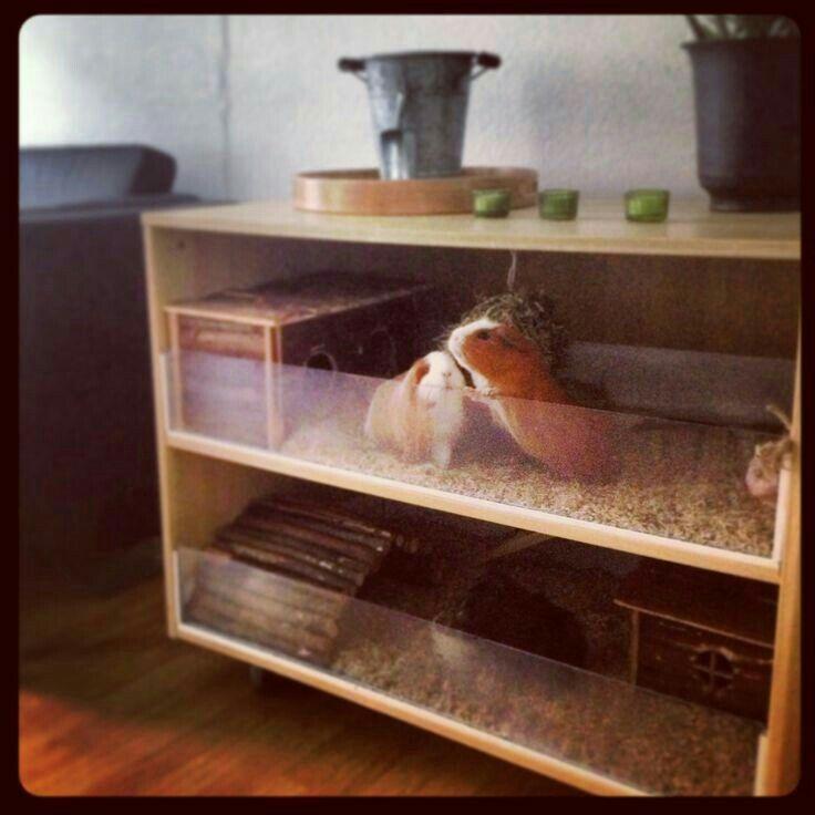 47 best guinea pig habitat images on pinterest pigs for Guinea pig homes