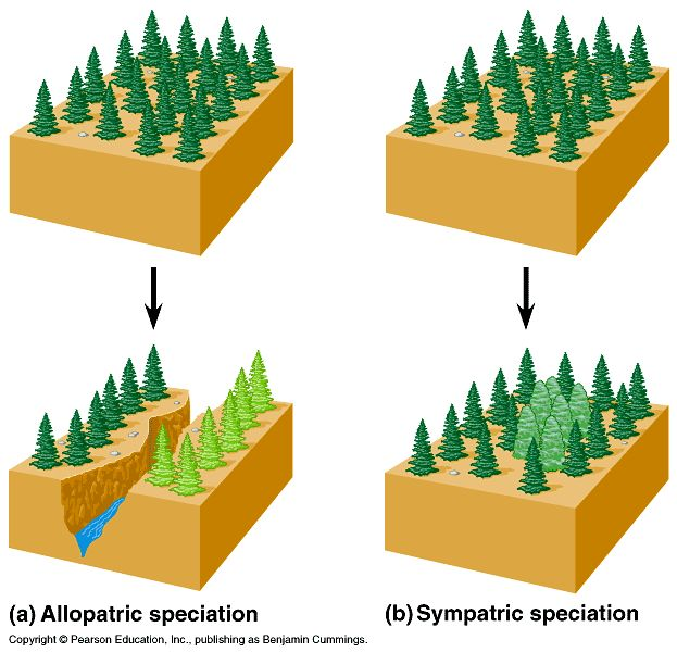 Allopatric Verses Sympatric Speciation