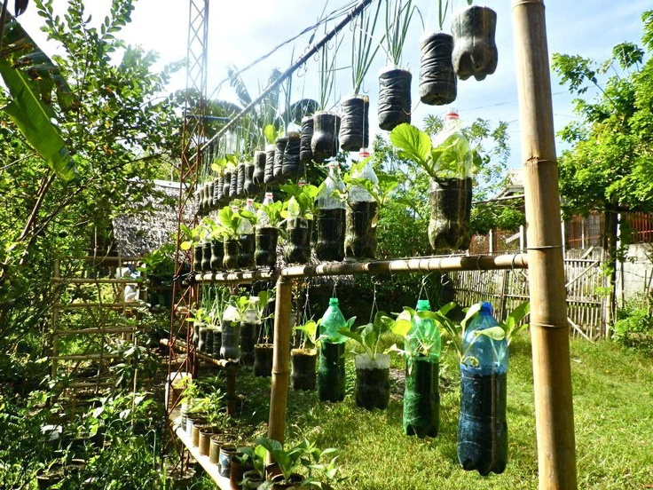 Hanging Bottles Recycle Your Bottles In A Hanging Garden