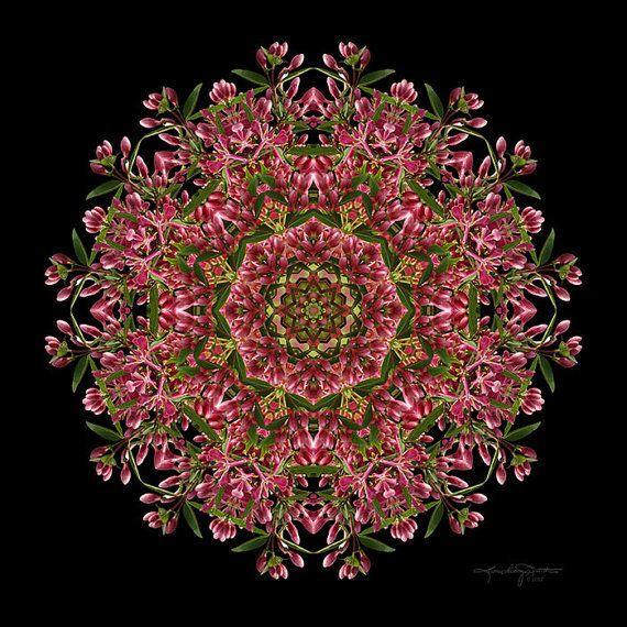 Meditation Art - Red Honeysuckle Flower Mandala - Infinitely Connected by Art #etsy #flowers #mandala
