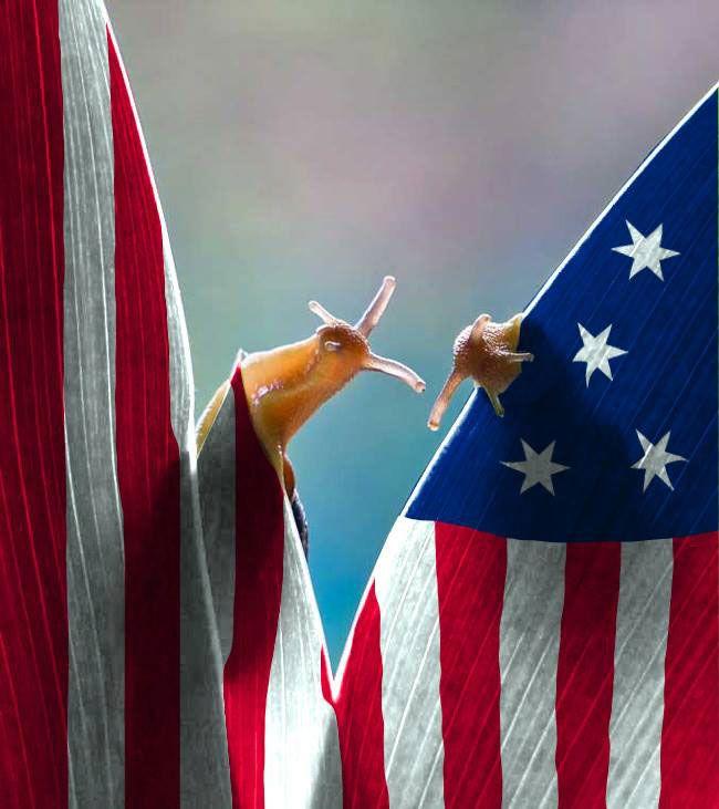 duo-escargots-drapeau-americain