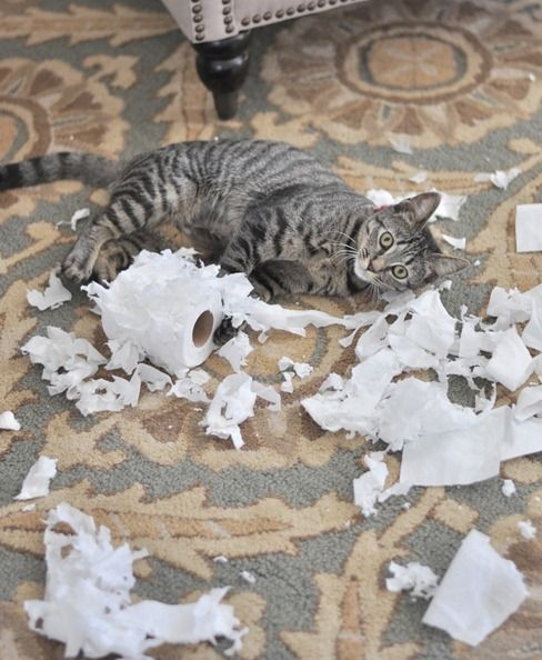 Oreck helps clean up after this.: Funny Captions, Funny Stories, Funny Pictures, Funny Cat, Toilets Paper, Funny Photo, Funny Animal, Things Cat, Cat Toys