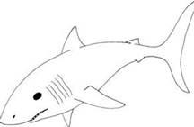 shark templates - Bing Images