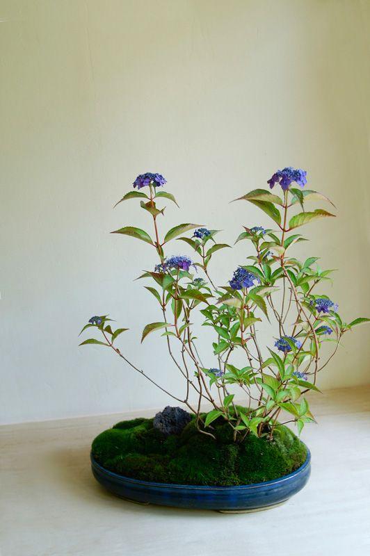 bonsai / kokedama. This site has a lot more flower type bonsais.