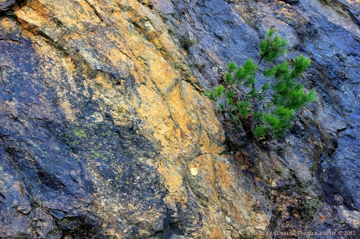 CLP0039 - from the rock