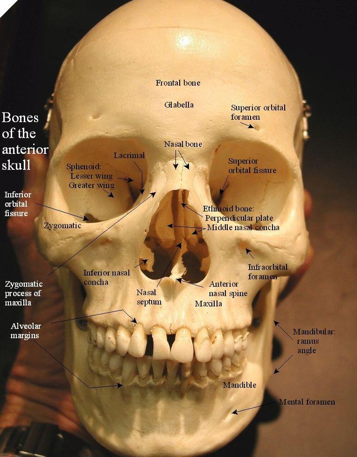 226 best images about Bones, Beautiful Bones on Pinterest