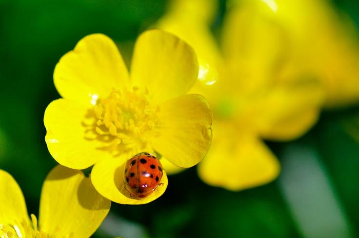 15 best les plantes annuelles et vivaces images on for Les plantes vivaces