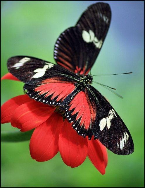 260 besten schmetterlinge bilder auf pinterest for Kleine fliegen blumen
