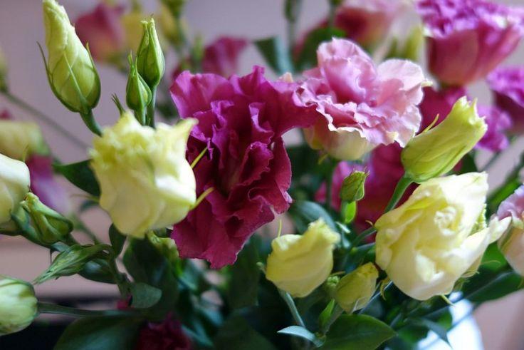 Bday flowers!