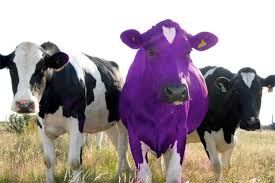 Image result for purple cow